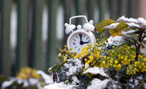 alarm clock with flowers and snow